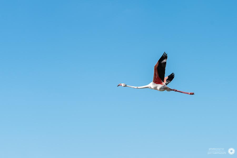 Gli uccelli del Ornithological Park of Pont de Gau