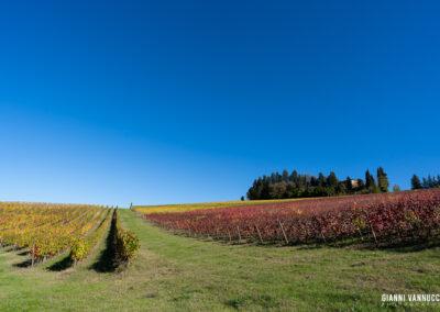 Vigna Toscana