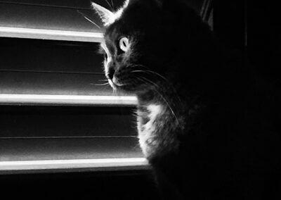 Il mio gatto